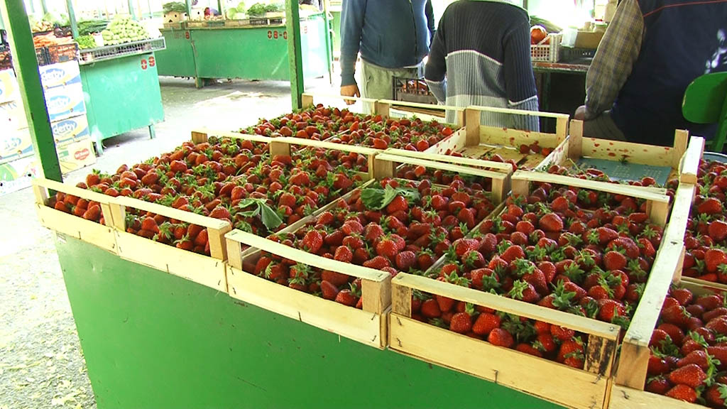 Rod jagoda ove godine odličan, cena prati kvalitet